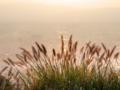京都新聞写真コンテスト 夕日浴びる力芝