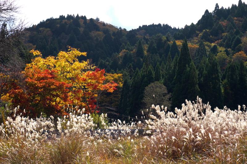 京都新聞写真コンテスト 山村の秋