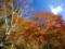 京都新聞写真コンテスト カラフルな秋の山