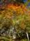 京都新聞写真コンテスト 秋色のグラジエント