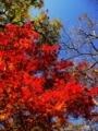 京都新聞写真コンテスト 照紅葉