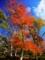 京都新聞写真コンテスト 紅葉盛り