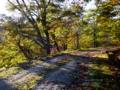 京都新聞写真コンテスト 山の帰り道