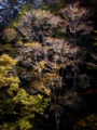 京都新聞写真コンテスト 落葉間近