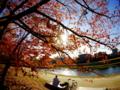 京都新聞写真コンテスト 秋日和