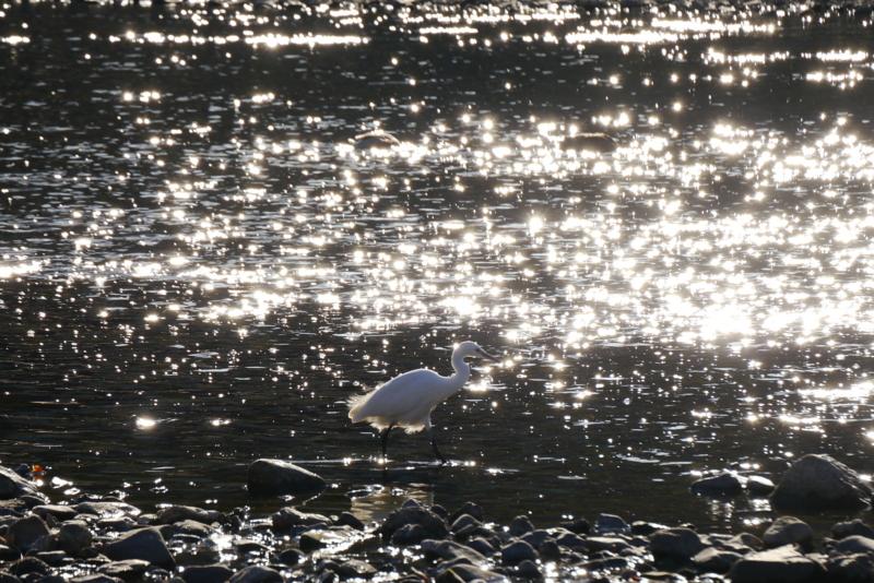 京都新聞写真コンテスト 煌く光の中で