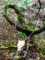 京都新聞写真コンテスト 命の循環