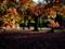 京都新聞写真コンテスト 秋の日は釣瓶落とし