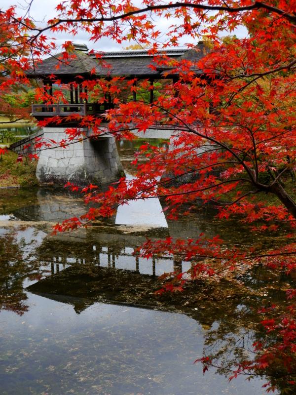 京都新聞写真コンテスト 修学院離宮千歳橋