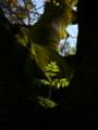 京都新聞写真コンテスト 木の上の日溜まり