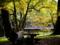 京都新聞写真コンテスト 「綺麗ね」「そうだね」