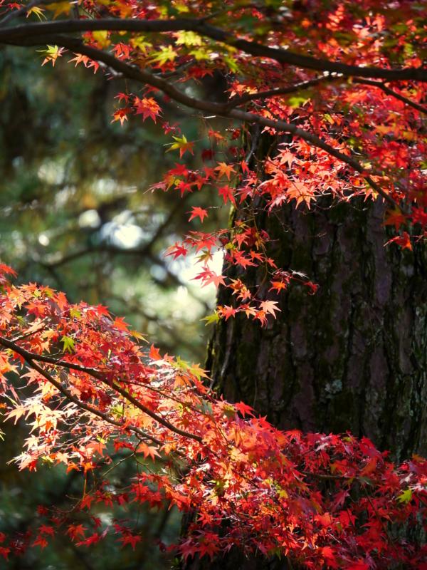 京都新聞写真コンテスト 最後の輝き