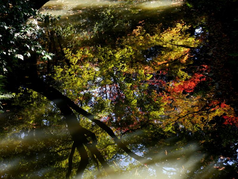 京都新聞写真コンテスト 池の中で色づく紅葉