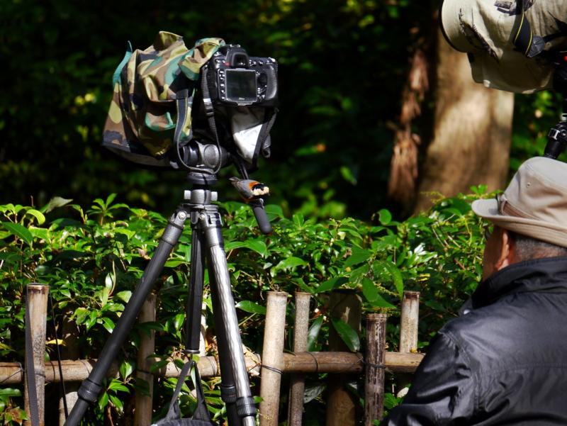 京都新聞写真コンテスト おじさん、僕を写しにきたの?