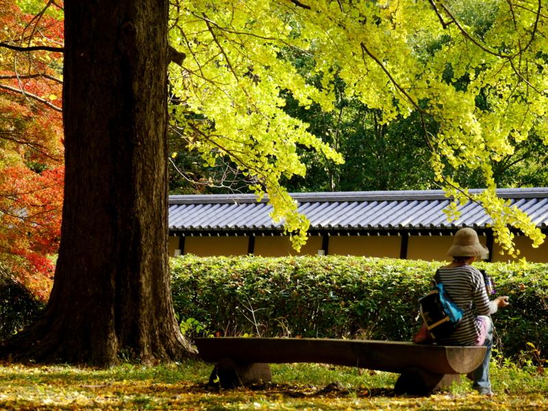 京都新聞写真コンテスト 極上の憩い