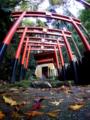 京都新聞写真コンテスト 神域へようこそ