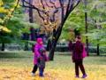 京都新聞写真コンテスト 異国の秋