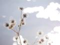 京都新聞写真コンテスト 枯れ草の造形