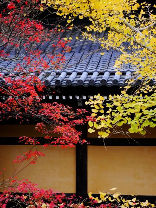 京都新聞写真コンテスト 赤と黄色のせめぎあい