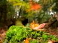 京都新聞写真コンテスト 秋の森の中で