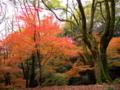 京都新聞写真コンテスト 山紅葉