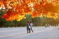 京都新聞写真コンテスト 照り紅葉の夕暮れ