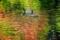 京都新聞写真コンテスト 秋色のマーブル模様