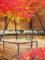 京都新聞写真コンテスト 秋の公園