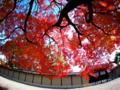 京都新聞写真コンテスト 迎賓館のおもてなし