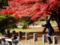 京都新聞写真コンテスト 紅葉撮影中