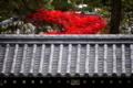 京都新聞写真コンテスト 塀の内側