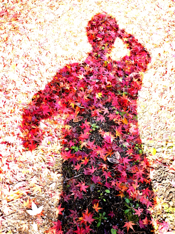 京都新聞写真コンテスト 紅葉マン