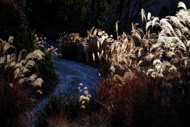 京都新聞写真コンテスト 初冬の山里