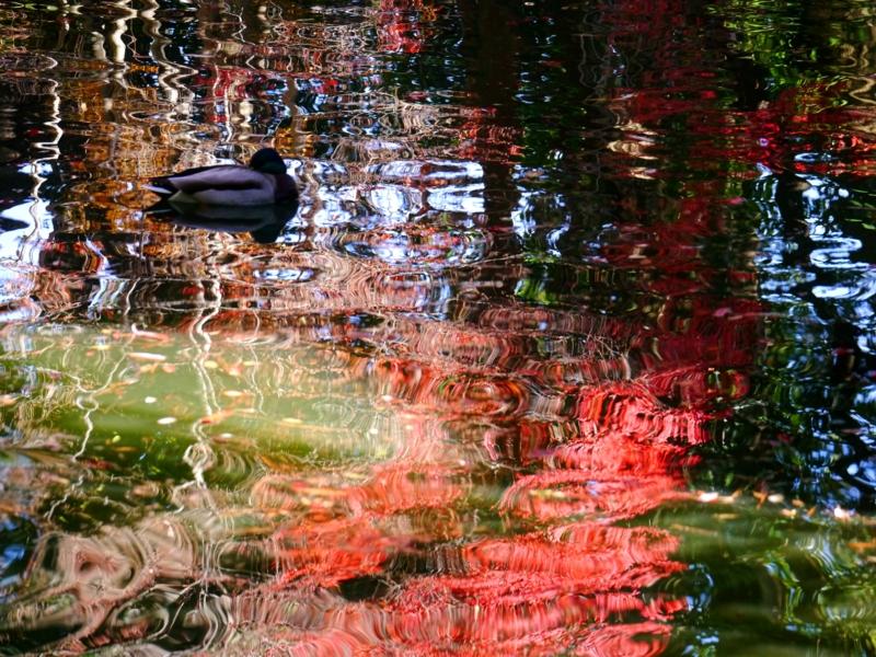 京都新聞写真コンテスト 秋色の抽象画