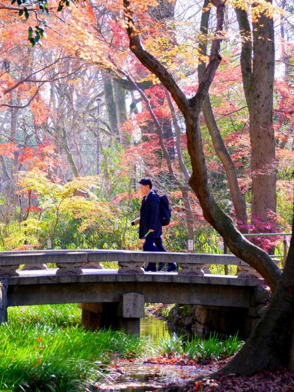 京都新聞写真コンテスト 糺の森を行く