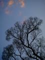 京都新聞写真コンテスト 空に広がる神経叢