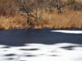 京都新聞写真コンテスト 凍てつく深泥池