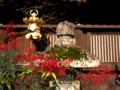 京都新聞写真コンテスト 南天の実るころ