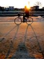 京都新聞写真コンテスト 夕日に照らされて