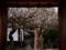 京都新聞写真コンテスト 門の中は満開の梅