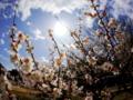 京都新聞写真コンテスト 早春陽光
