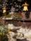 京都新聞写真コンテスト 梅と燈籠