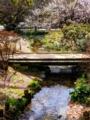 京都新聞写真コンテスト 早春の出水の小川
