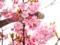 京都新聞写真コンテスト 花粉にまみれて