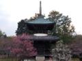 京都新聞写真コンテスト 紅白梅