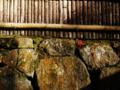 京都新聞写真コンテスト 石垣の落椿