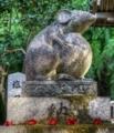 京都新聞写真コンテスト 狛鼠