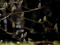 京都新聞写真コンテスト 光を纏って春を待つ