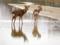 京都新聞写真コンテスト 高野川の見返りの鹿