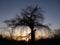 京都新聞写真コンテスト 今はひっそり枝垂桜